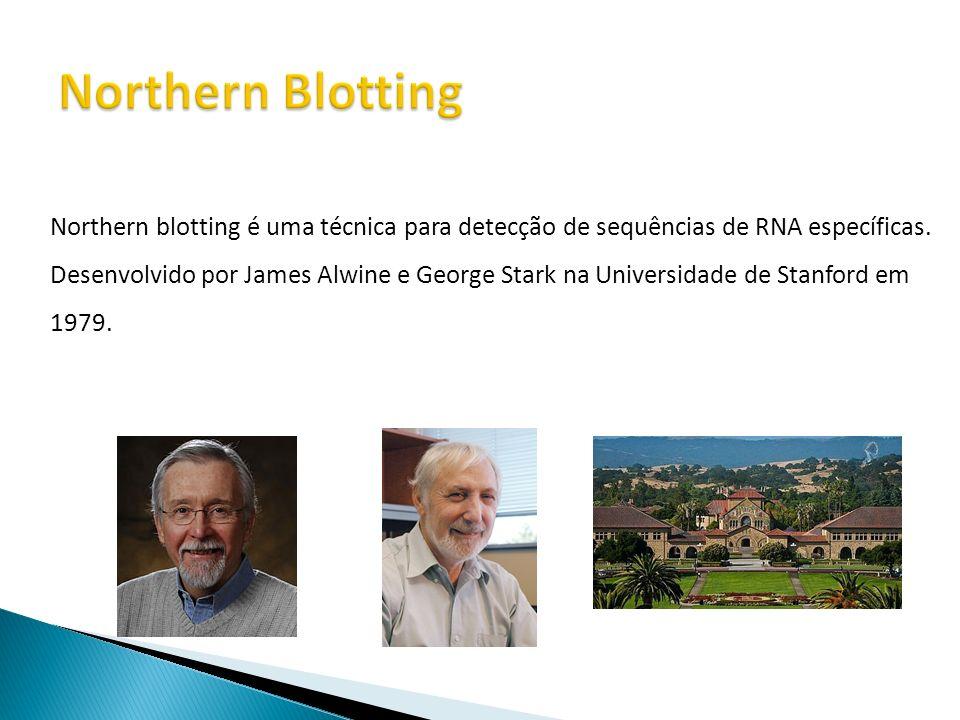 Northern blotting é uma técnica para detecção de sequências de RNA específicas. Desenvolvido por James Alwine e George Stark na Universidade de Stanfo