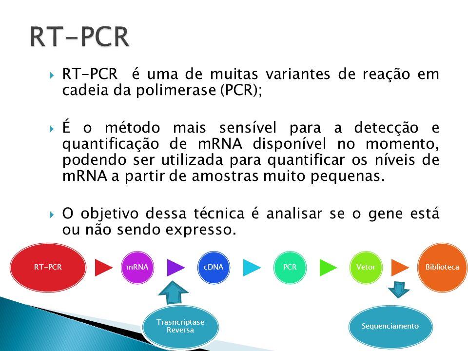 RT-PCR é uma de muitas variantes de reação em cadeia da polimerase (PCR); É o método mais sensível para a detecção e quantificação de mRNA disponível
