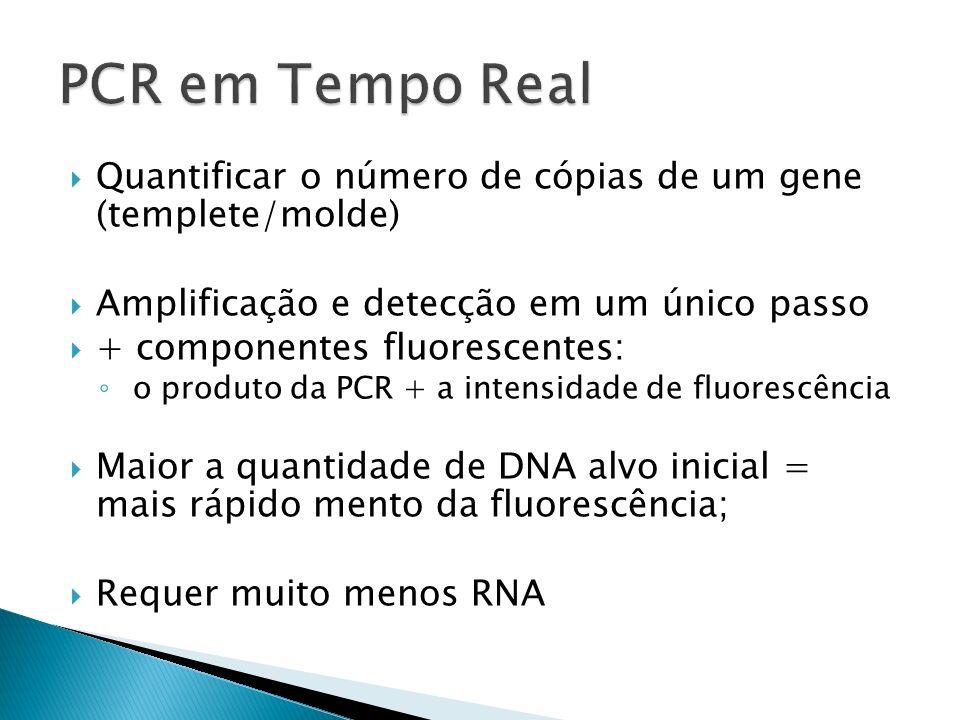 Quantificar o número de cópias de um gene (templete/molde) Amplificação e detecção em um único passo + componentes fluorescentes: o produto da PCR + a