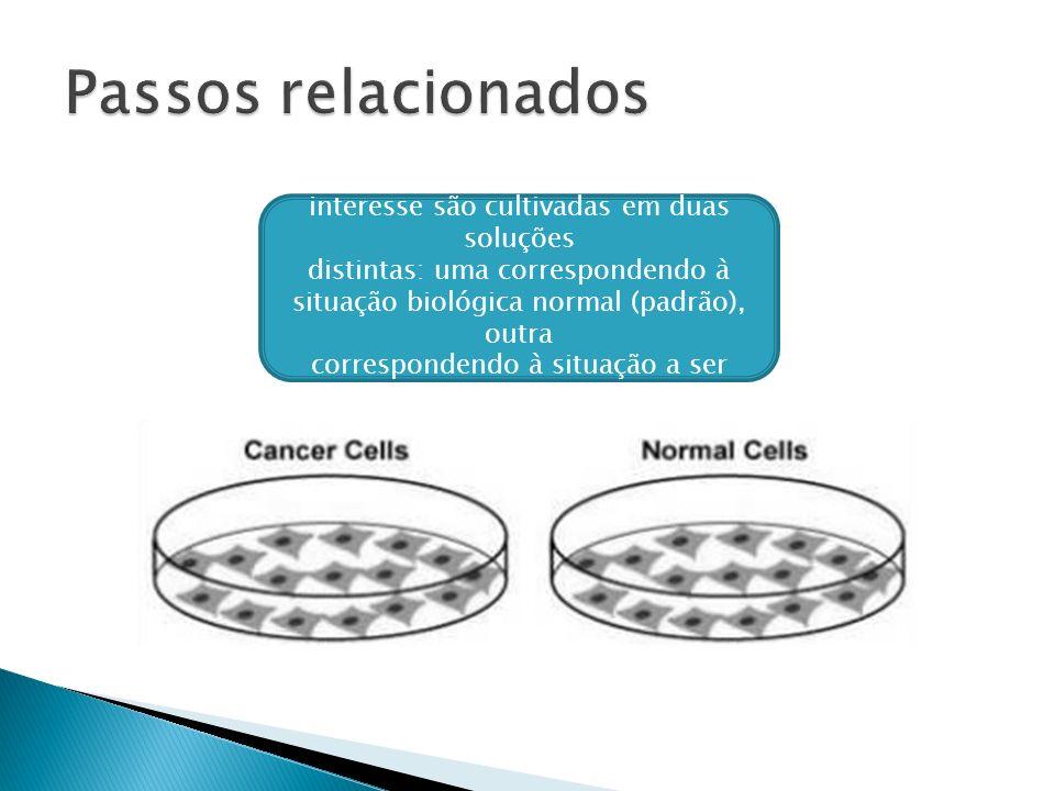 Células cujo DNA possui os genes de interesse são cultivadas em duas soluções distintas: uma correspondendo à situação biológica normal (padrão), outr