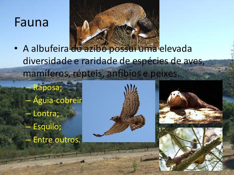 Fauna A albufeira do azibo possui uma elevada diversidade e raridade de espécies de aves, mamíferos, répteis, anfíbios e peixes. – Raposa; – Águia-cob