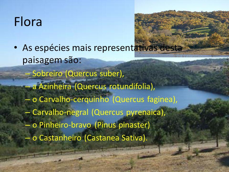 Flora As espécies mais representativas desta paisagem são: – Sobreiro (Quercus suber), – a Azinheira (Quercus rotundifolia), – o Carvalho-cerquinho (Q