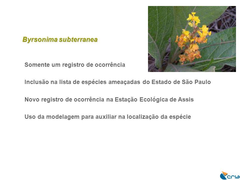 Byrsonima subterranea Somente um registro de ocorrência Inclusão na lista de espécies ameaçadas do Estado de São Paulo Novo registro de ocorrência na Estação Ecológica de Assis Uso da modelagem para auxiliar na localização da espécie