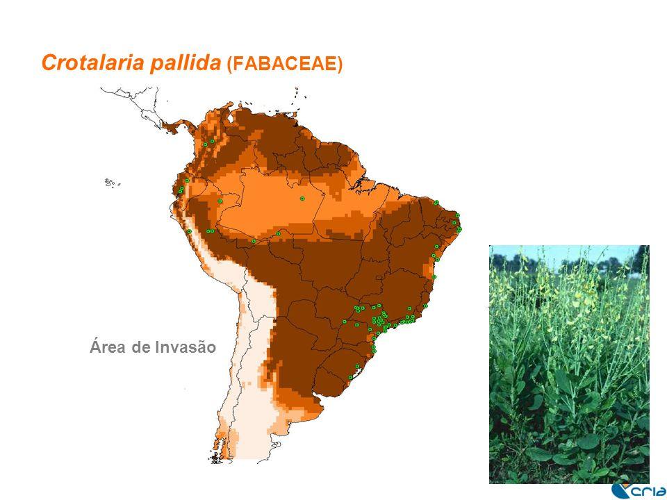 Crotalaria pallida (FABACEAE) Área de Invasão