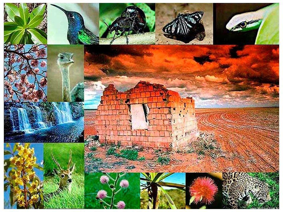 A natureza é sábia e traz em si o mistério da vida, da reprodução, da interação perfeita e equilibrada entre seus elementos.