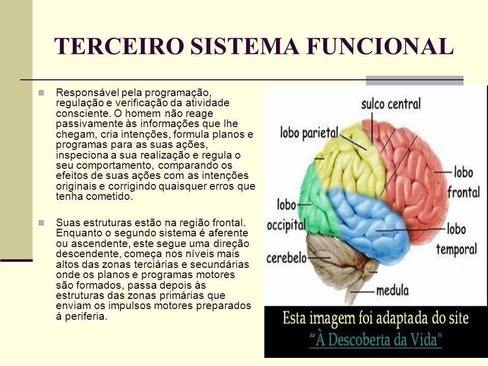 TERCEIRO SISTEMA FUNCIONAL Responsável pela programação, regulação e verificação da atividade consciente. O homem não reage passivamente às informaçõe