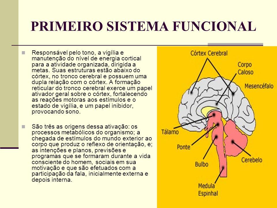 PRIMEIRO SISTEMA FUNCIONAL Responsável pelo tono, a vigília e manutenção do nível de energia cortical para a atividade organizada, dirigida a metas. S