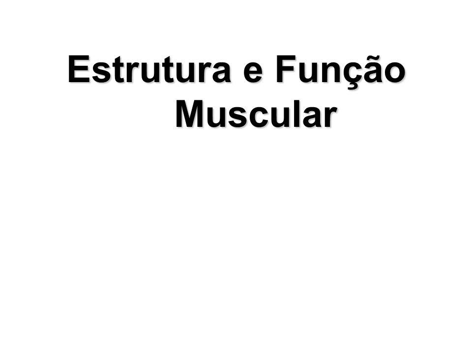 Estrutura e Função Muscular