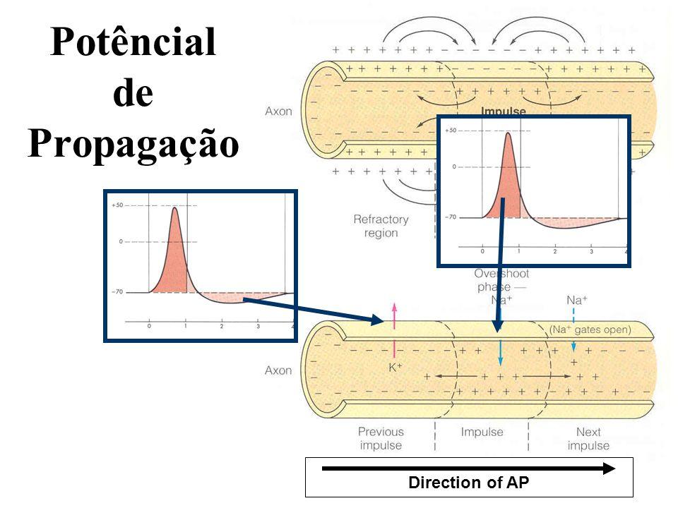 Potêncial de Propagação Direction of AP
