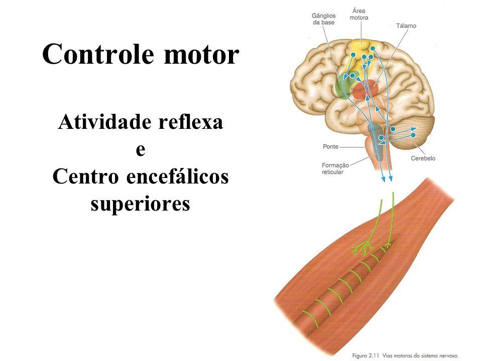 Controle motor Atividade reflexa e Centro encefálicos superiores