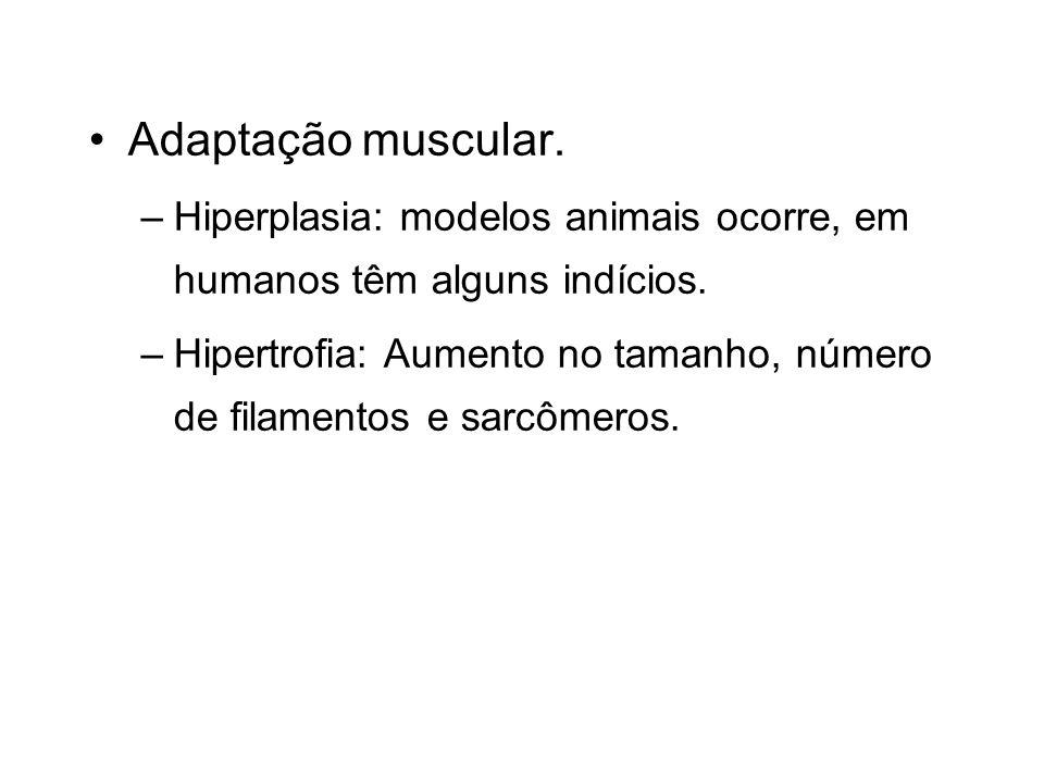 Adaptação muscular. –Hiperplasia: modelos animais ocorre, em humanos têm alguns indícios. –Hipertrofia: Aumento no tamanho, número de filamentos e sar