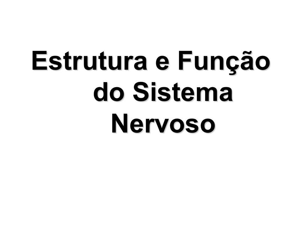 Estrutura e Função do Sistema Nervoso