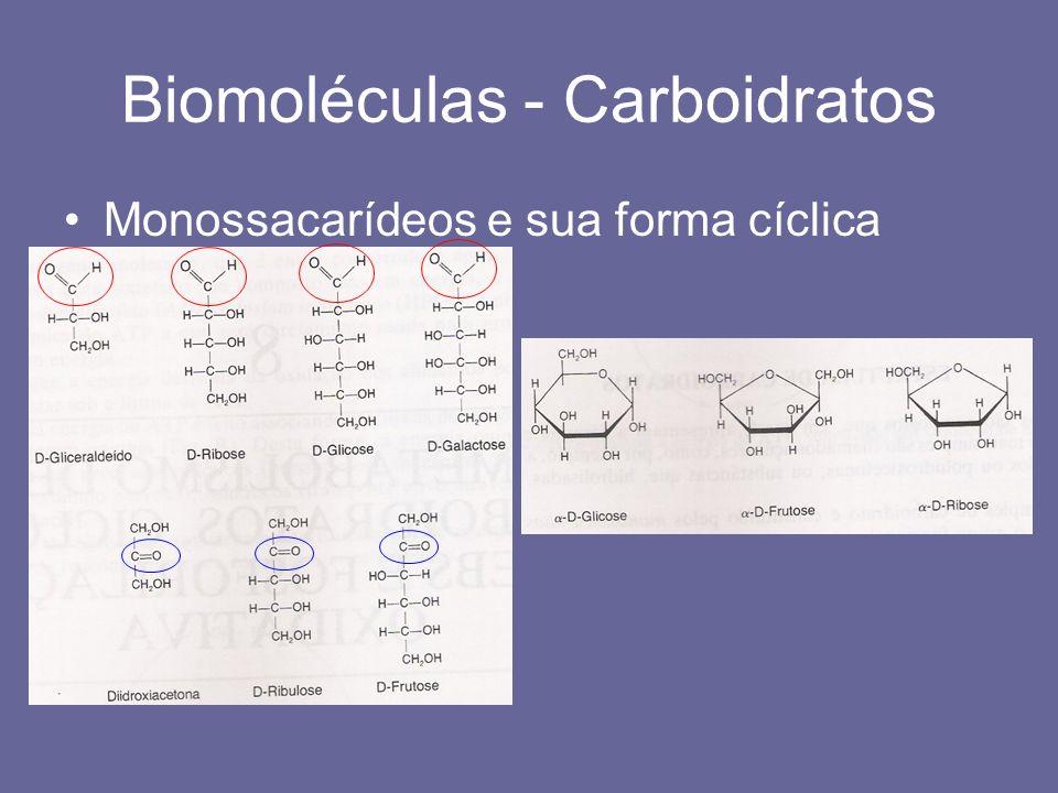 Biomoléculas - Carboidratos Monossacarídeos e sua forma cíclica