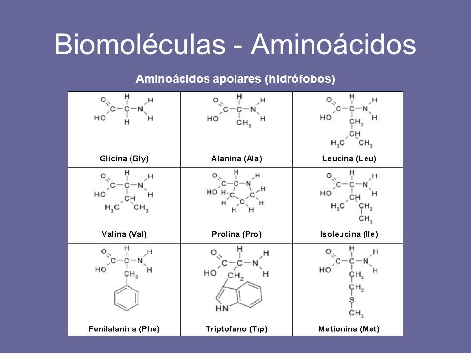 Biomoléculas - Aminoácidos Aminoácidos apolares (hidrófobos)