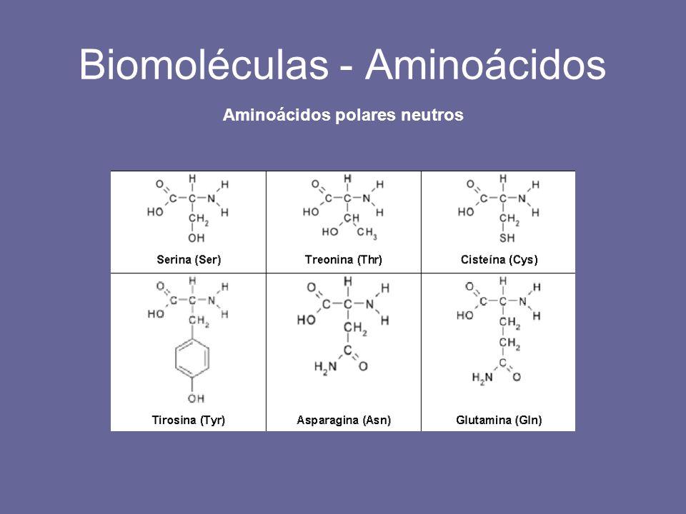 Biomoléculas - Aminoácidos Aminoácidos polares neutros