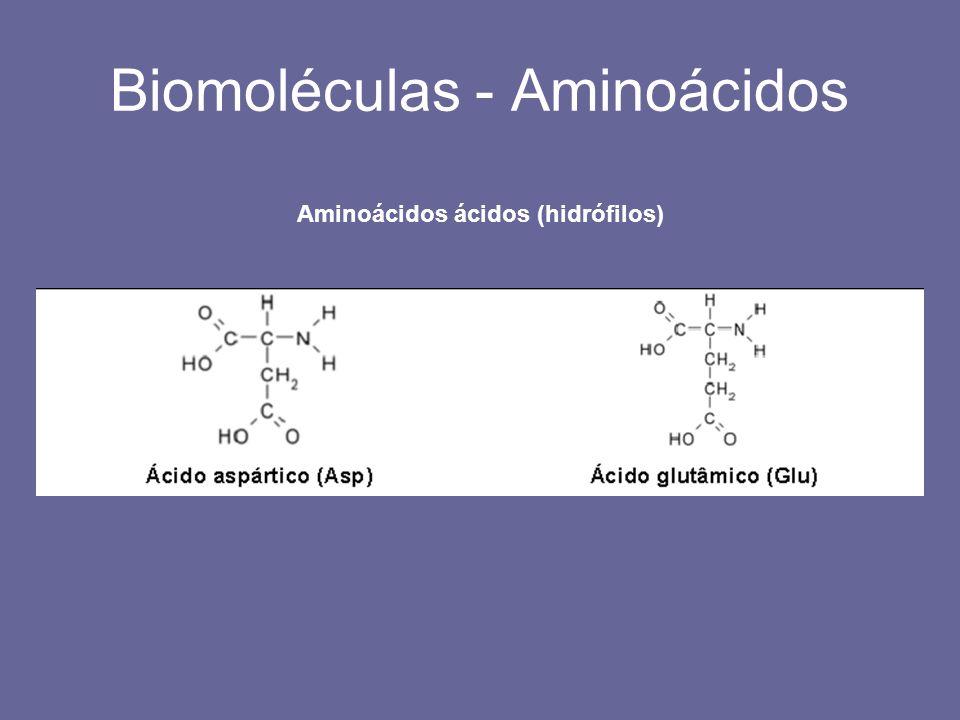 Biomoléculas - Aminoácidos Aminoácidos ácidos (hidrófilos)