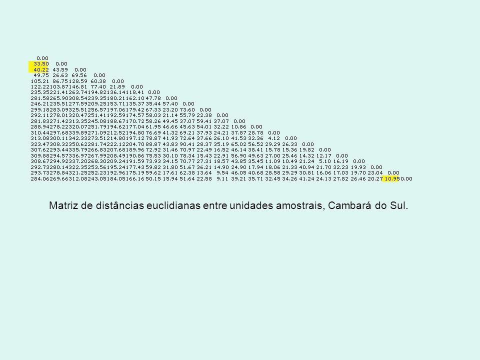 Matriz de distâncias euclidianas entre unidades amostrais, Cambará do Sul.