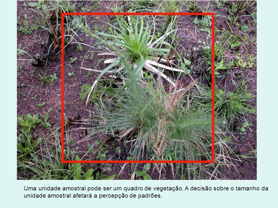 Uma unidade amostral pode ser um quadro de vegetação. A decisão sobre o tamanho da unidade amostral afetará a percepção de padrões.