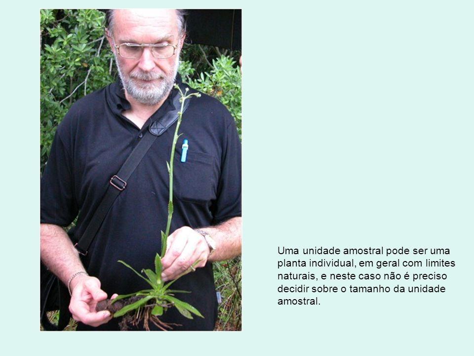 Uma unidade amostral pode ser uma planta individual, em geral com limites naturais, e neste caso não é preciso decidir sobre o tamanho da unidade amos
