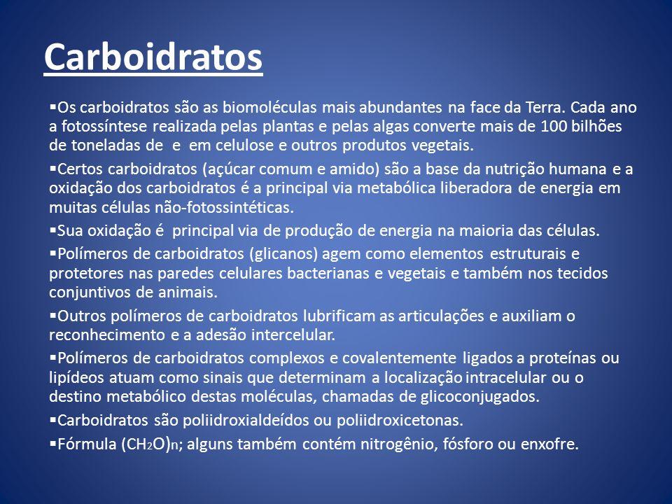 Carboidratos Os carboidratos são as biomoléculas mais abundantes na face da Terra.
