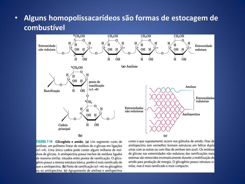 Alguns homopolissacarídeos são formas de estocagem de combustível