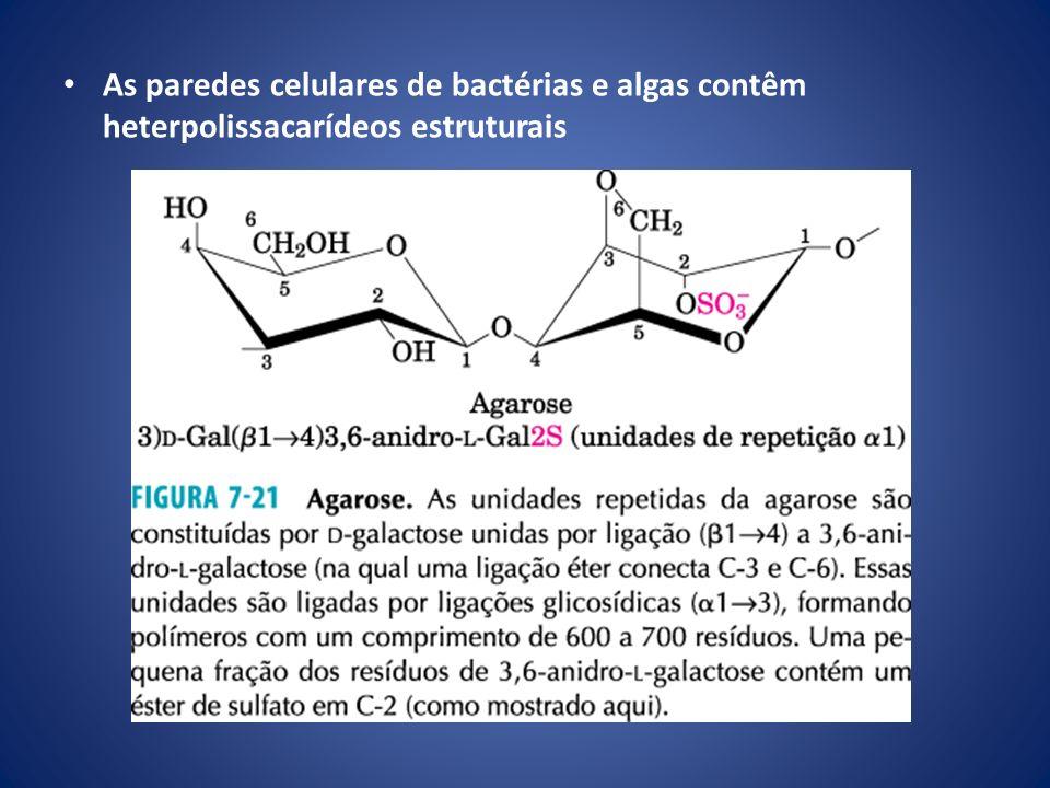 As paredes celulares de bactérias e algas contêm heterpolissacarídeos estruturais