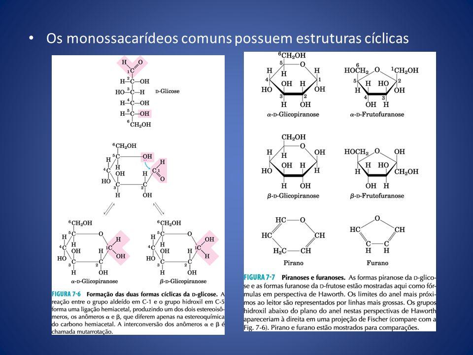 Glicoconjugados: proteoglicanos, glicoproteínas e glicolipídeos Os proteoglicanos são macromoléculas da superfície celular ou da matriz extracelular nas quais uma ou mais cadeias de glicosaminoglicanos sulfatados estão covalentemente unidas a uma proteína de membrana ou a uma proteína secretada.