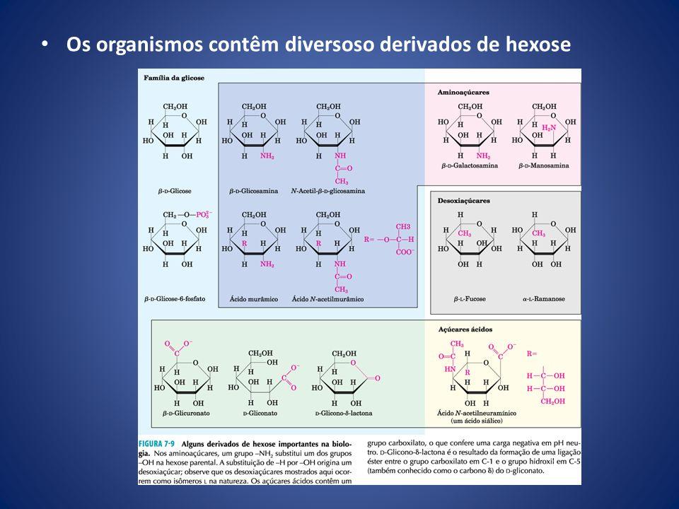Os dissacarídeos contêm uma ligação glicosídica