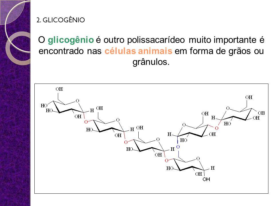 O glicogênio é outro polissacarídeo muito importante é encontrado nas células animais em forma de grãos ou grânulos. 2. GLICOGÊNIO