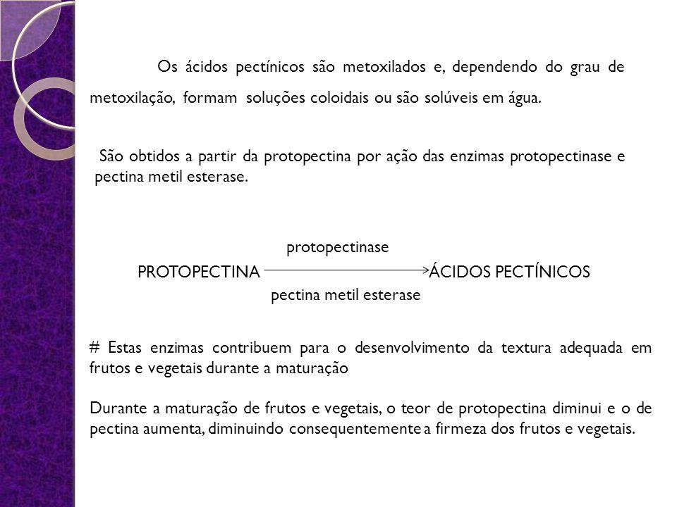 PROTOPECTINA ÁCIDOS PECTÍNICOS São obtidos a partir da protopectina por ação das enzimas protopectinase e pectina metil esterase. Os ácidos pectínicos