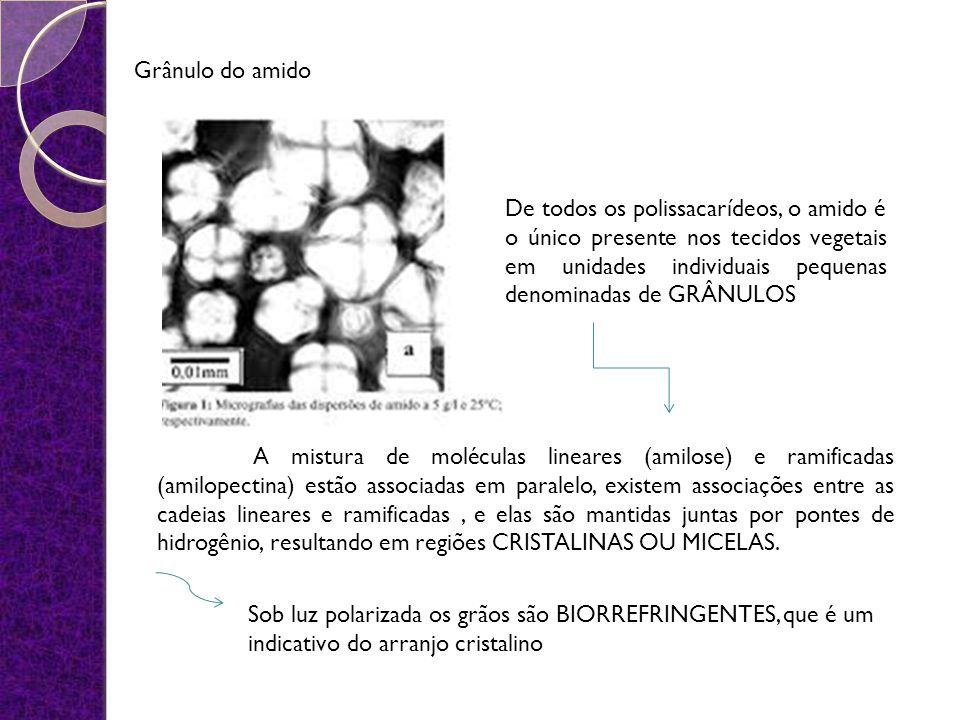 Grânulo do amido De todos os polissacarídeos, o amido é o único presente nos tecidos vegetais em unidades individuais pequenas denominadas de GRÂNULOS A mistura de moléculas lineares (amilose) e ramificadas (amilopectina) estão associadas em paralelo, existem associações entre as cadeias lineares e ramificadas, e elas são mantidas juntas por pontes de hidrogênio, resultando em regiões CRISTALINAS OU MICELAS.