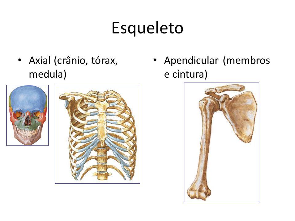 Esqueleto Axial (crânio, tórax, medula) Apendicular (membros e cintura)