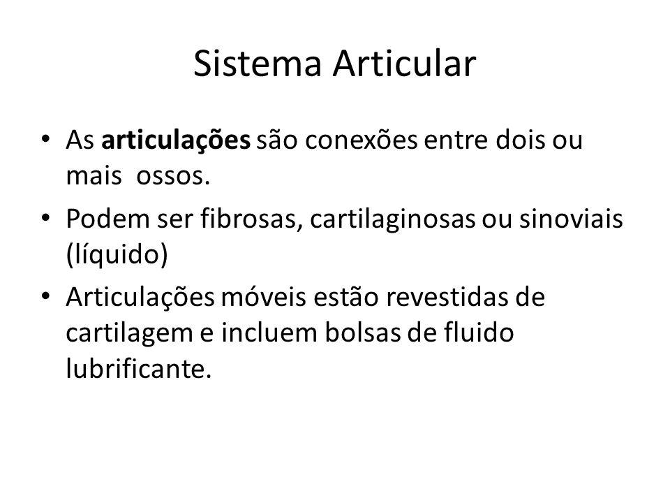 Sistema Articular As articulações são conexões entre dois ou mais ossos. Podem ser fibrosas, cartilaginosas ou sinoviais (líquido) Articulações móveis