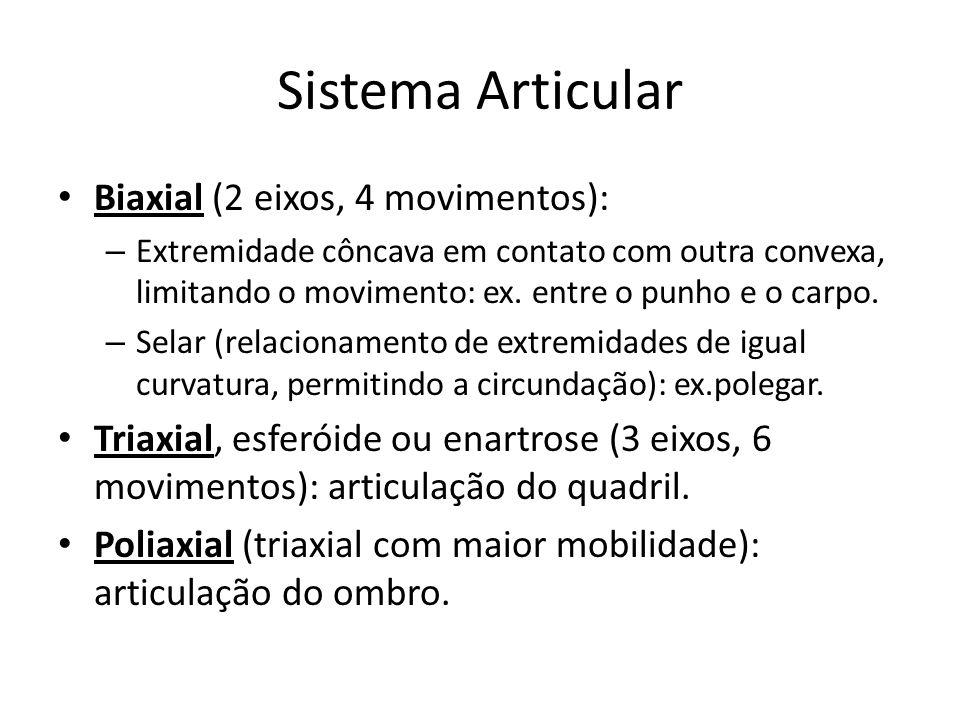 Sistema Articular Biaxial (2 eixos, 4 movimentos): – Extremidade côncava em contato com outra convexa, limitando o movimento: ex. entre o punho e o ca