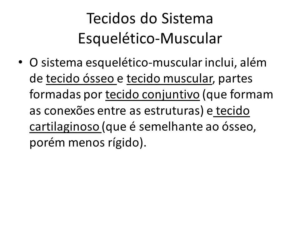 Tecidos do Sistema Esquelético-Muscular O sistema esquelético-muscular inclui, além de tecido ósseo e tecido muscular, partes formadas por tecido conj