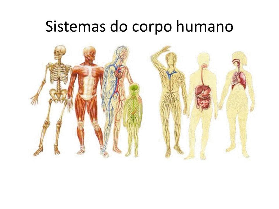 Como todos os sistemas estão interligados, todos estão relacionados ao movimento.