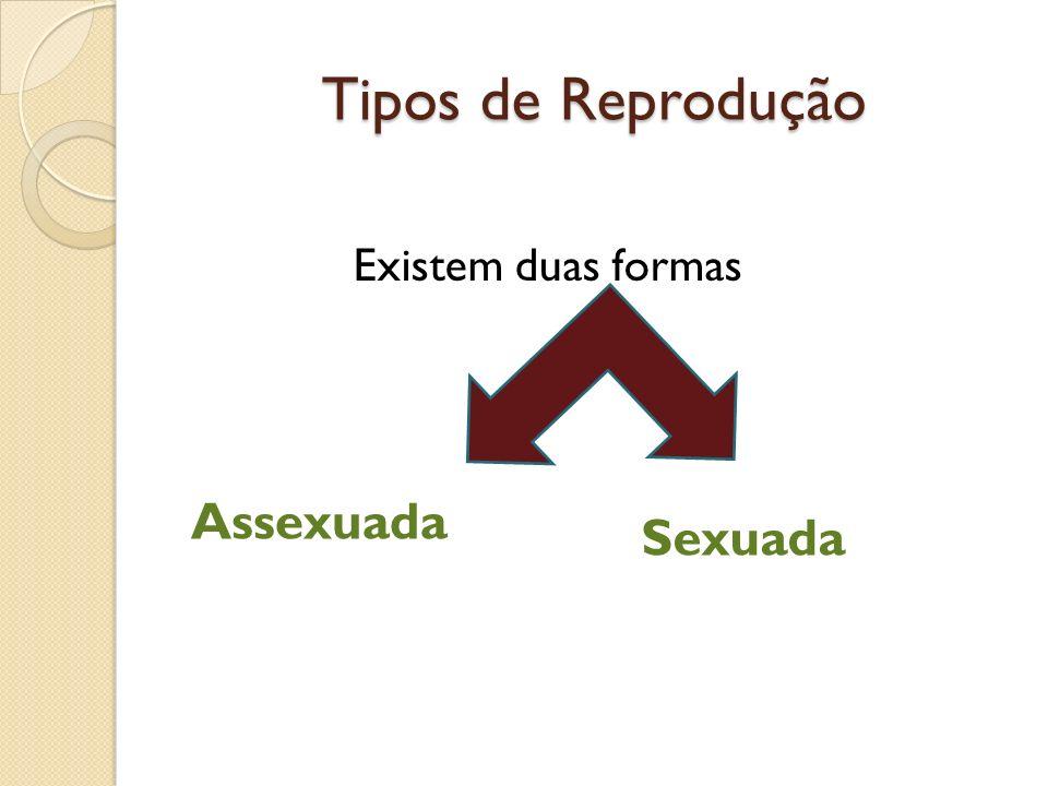 Existem duas formas Tipos de Reprodução Assexuada Sexuada