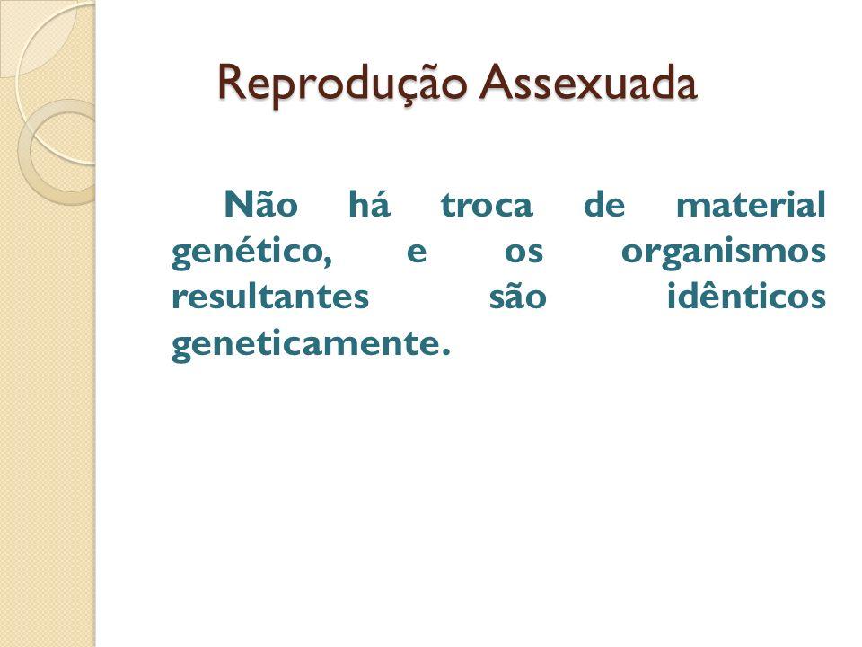 Reprodução Assexuada Reprodução Assexuada Não há troca de material genético, e os organismos resultantes são idênticos geneticamente.