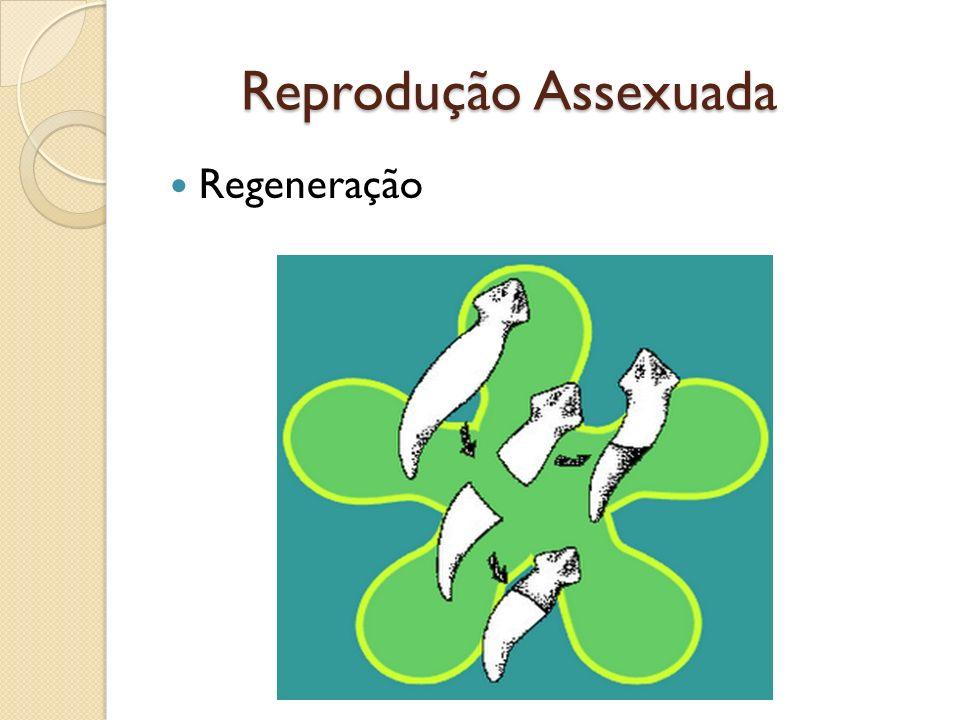 Regeneração Reprodução Assexuada Reprodução Assexuada