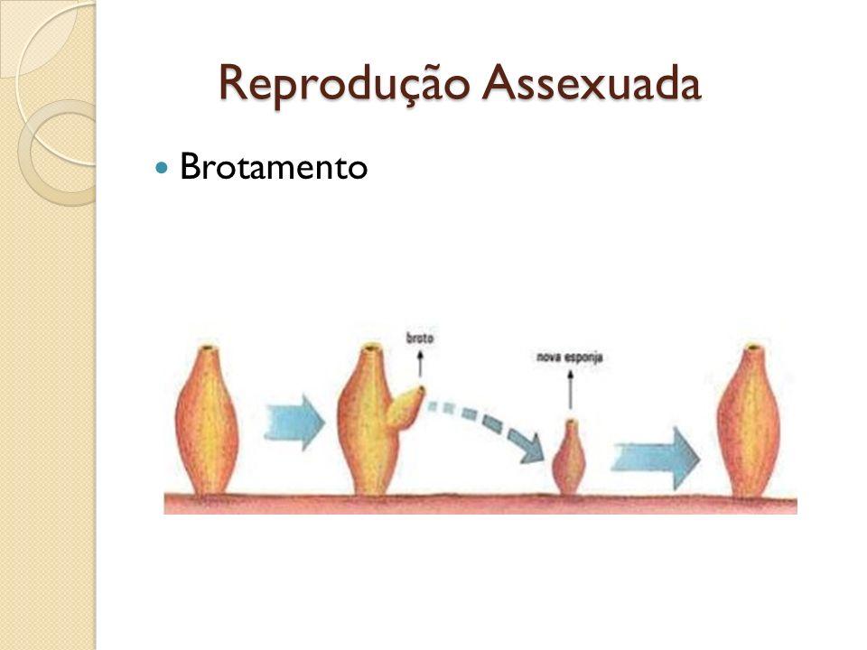 Brotamento Reprodução Assexuada Reprodução Assexuada
