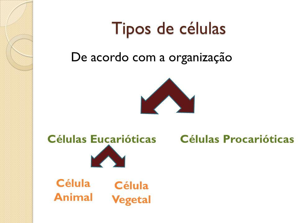 Tipos de células De acordo com a organização Células EucarióticasCélulas Procarióticas Célula Animal Célula Vegetal