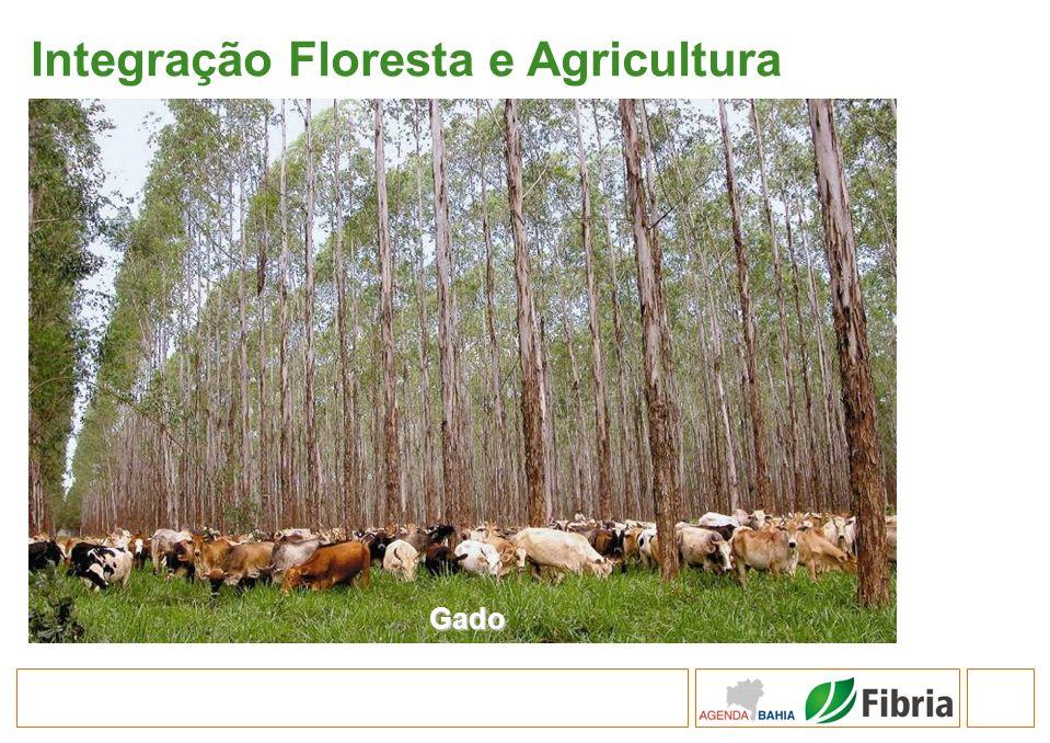 Integração Floresta e Agricultura Gado