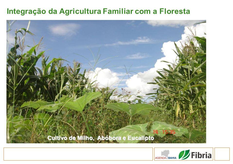 Cultivo de Milho, Abóbora e Eucalipto Integração da Agricultura Familiar com a Floresta