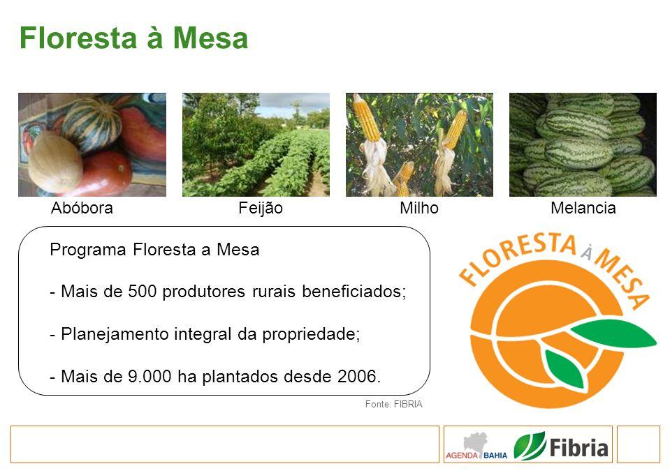 Programa Floresta a Mesa - Mais de 500 produtores rurais beneficiados; - Planejamento integral da propriedade; - Mais de 9.000 ha plantados desde 2006
