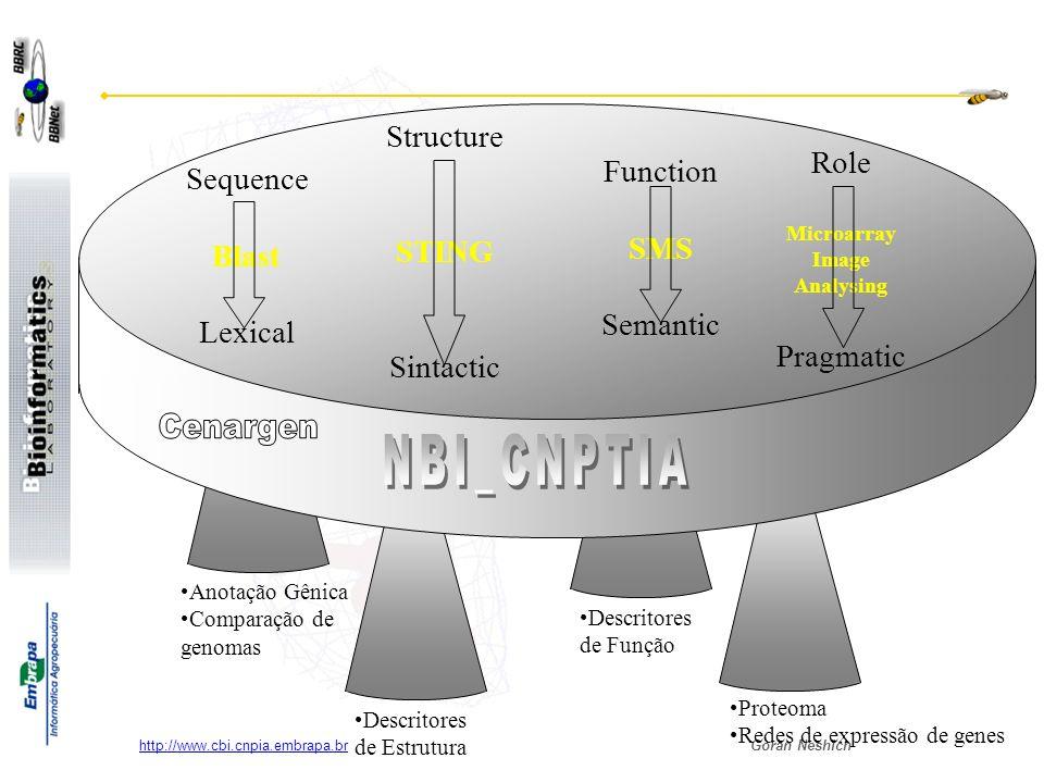Goran Neshich http://www.cbi.cnpia.embrapa.br Bioinformática na EMBRAPA Seqüenciamento e Anotação das seqüências (unidades descentralizadas da EMBRAPA) Análise das Estruturas das proteínas e seus complexos com DNA e Ligantes (Cenargen & NBI/CNPTIA) Funcionalidade das proteínas e seus complexos (NBI – CNPTIA) Fluxograma – descrição completa do projeto GENOMA Alvos identificados nas estruturas protéicas e ligantes detectados como modificadores da função (NBI – CNPTIA) Função EstruturaSeqüências