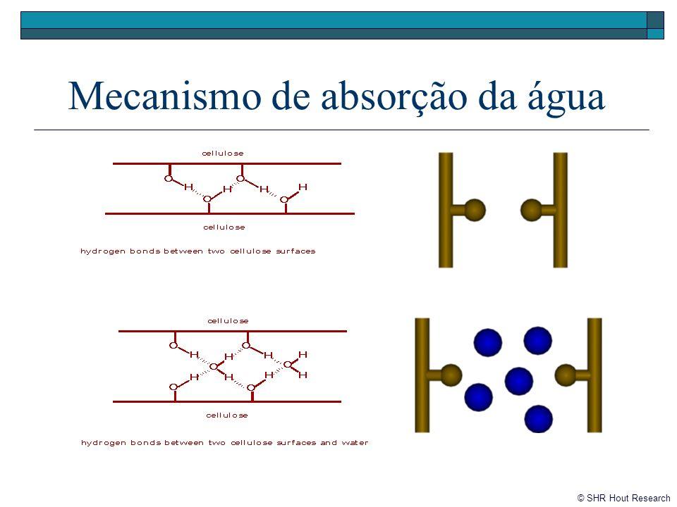 Mecanismo de absorção da água © SHR Hout Research