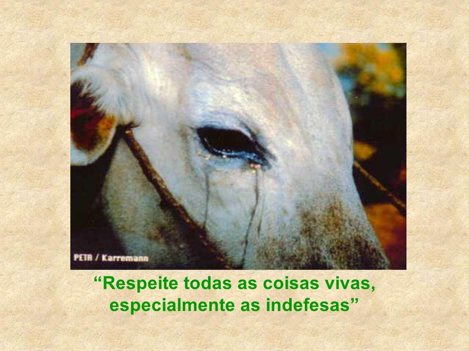 Dr. Louis J. Camuti Não creia que os animais sofrem menos do que os seres humanos.