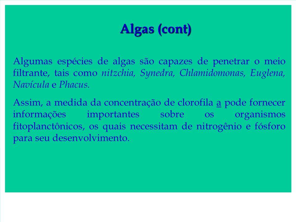 Algas (cont) Algumas espécies de algas são capazes de penetrar o meio filtrante, tais como nitzchia, Synedra, Chlamidomonas, Euglena, Navícula e Phacu
