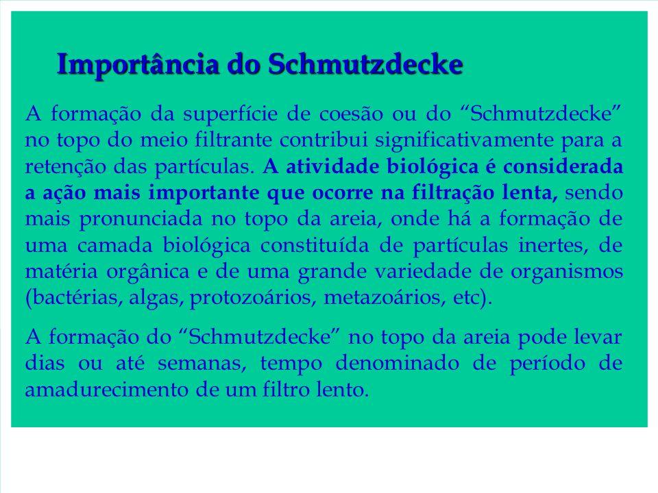 Importância do Schmutzdecke A formação da superfície de coesão ou do Schmutzdecke no topo do meio filtrante contribui significativamente para a retenç