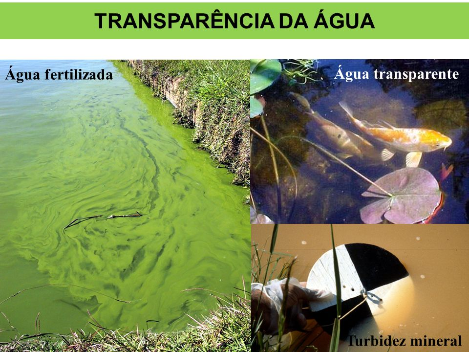 Turbid water Clear water Água fertilizada TRANSPARÊNCIA DA ÁGUA Água transparente Turbidez mineral